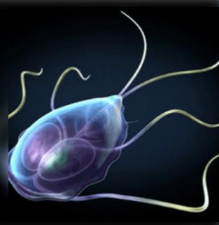parazita kezelése férgekkel