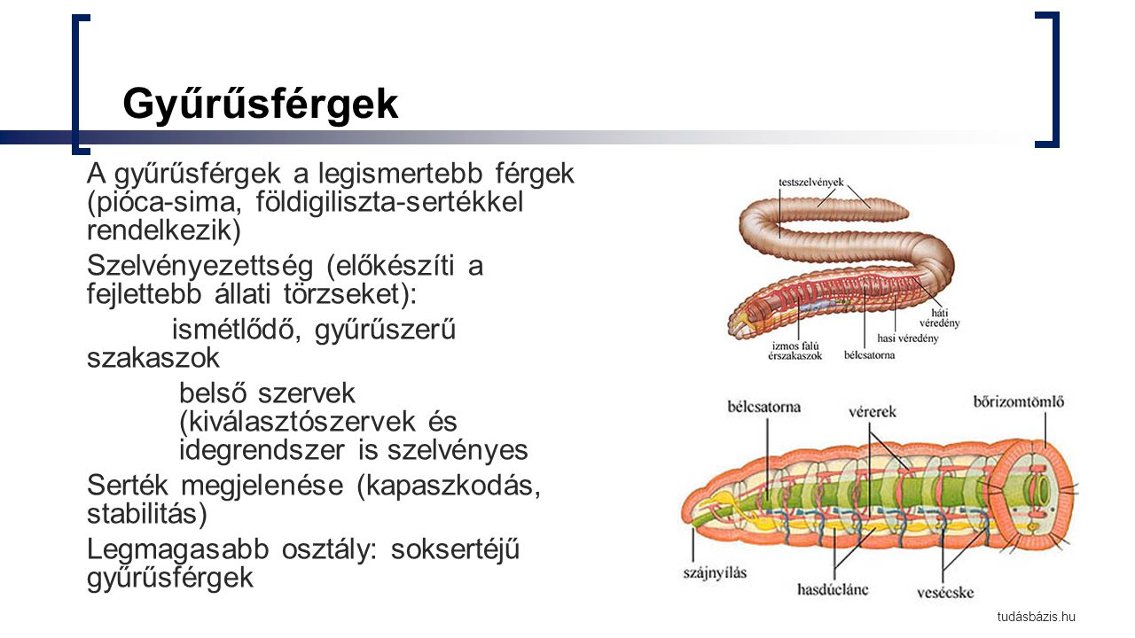 papilloma vírus elleni oltás eta