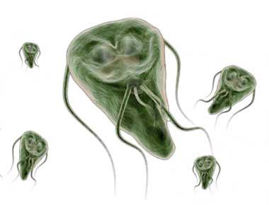 giardien menschen behandlung a vastagbél megtisztítja a parazitákat