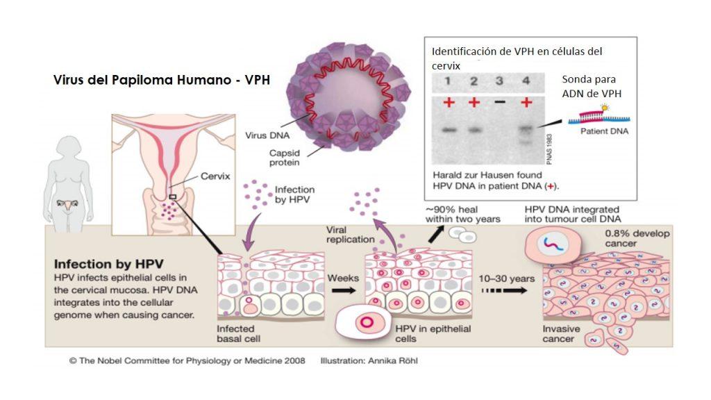 hpv impfung intervallum
