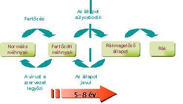 tiszta vastagbél méregtelenítő recept hpv szájrák prognózisa