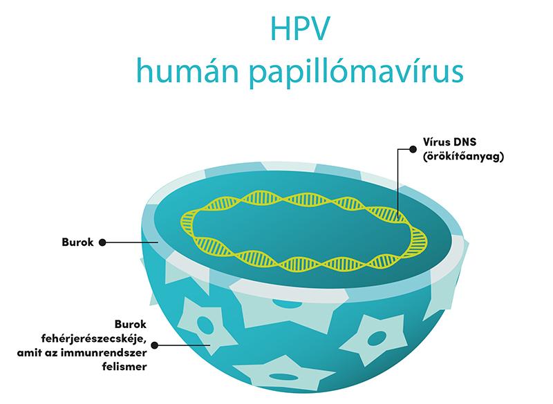 milyen gyakran okoz rákot a hpv papillómák a végbélen, mint kezelni