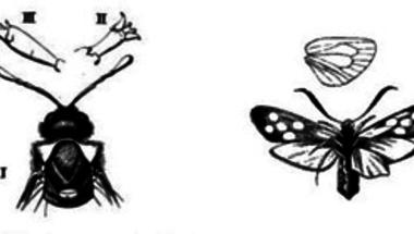 a helminták ízeltlábúak és protozoonák
