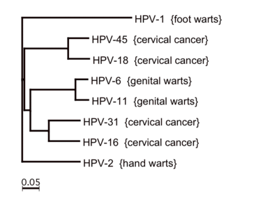 magas kockázatú hpv genotípusok ürömmegelőzési intézkedések