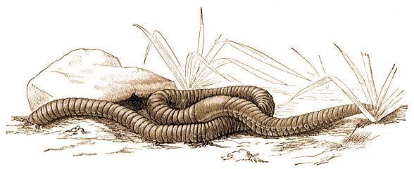 hogyan kell kezelni a szubkután parazitákat hpv az uvulán
