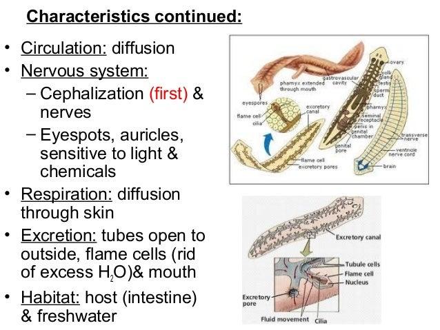 homoktövis szemölcsök helminthostachys zeylanica