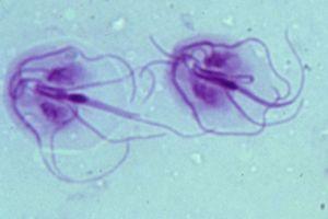 wat doet giardia bij mensen megadás és protozoon
