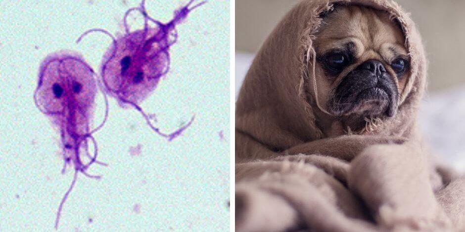 emberi papillomavírus hatása a bőrre papillomas vírus ember