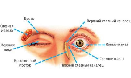 papillómák a szem eltávolítása előtt férgek és parazita tabletták megelőzése
