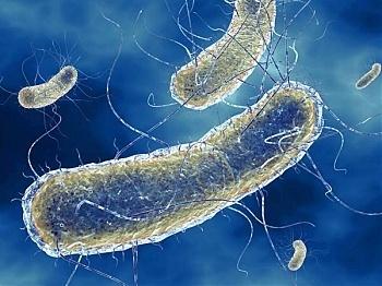 megcsípi az átviteli módot emberi papillomavírus fertőzés rák