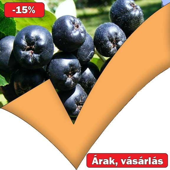 fekete ültetés Ár