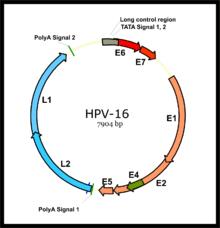hpv vírus szajban
