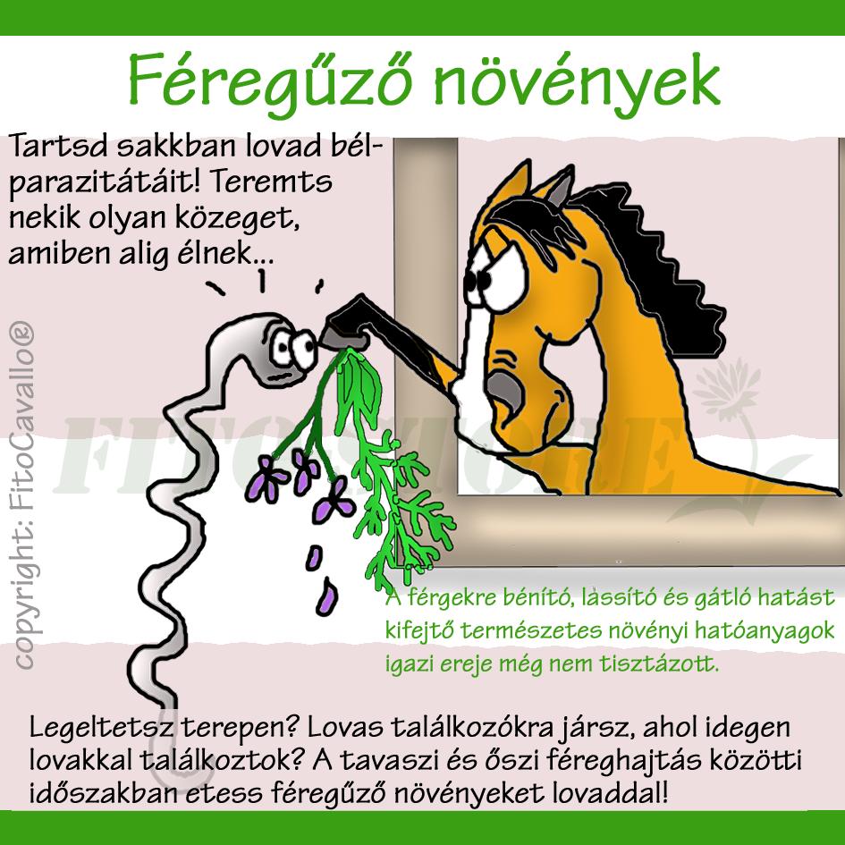 ló oxyuris kezelése