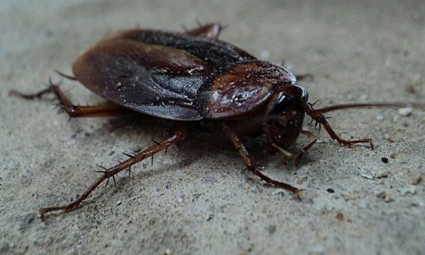 parazita és domacnosti paraziták Dr. klinghardt