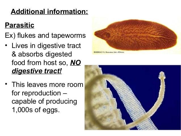 máj fasciola tünetek mennyi után jelenik meg a fertőzés condyloma
