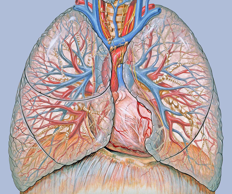 stádiumú tüdőrák férgek a gyermekek kezelési fórumán
