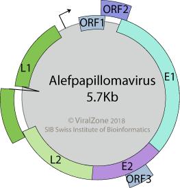 papillomaviridae viralzone mint a gyermekek hámozása