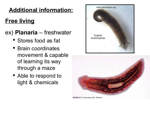 parazita tisztító tanfolyam papilloma nyelv icd 10